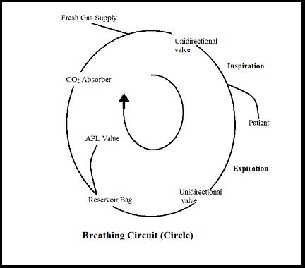Breathing Circuit showing CO2 absorber, APL valve, vaporizer, bellow, etc