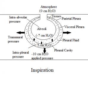Inspiration during negative pressure ventilation
