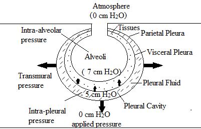 Expiration under Negative Pressure Ventilation