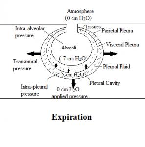 expiration during negative pressure ventilation