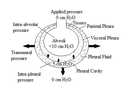 Expiration during Positive Pressure Ventilation