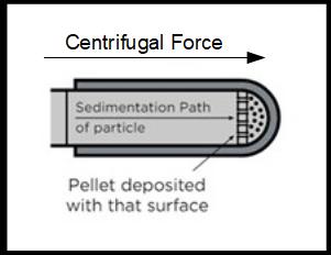 Sedimentation in Swing Bucket Rotor